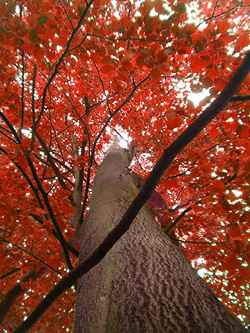 Treed XIV -- … and Autumn.